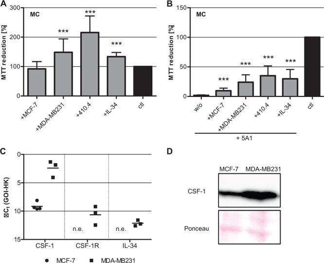 Toxicity of <t>5A1</t> on MC can be rescued A. Metabolic activity of MC is increased in co-culture with breast cancer cells or IL-34 treatment, analyzed by MTT reduction (mean ± SD, n = 4, *** P