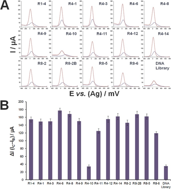 Affinity analyses of aptamer clones by square wave voltammetry. (A) Square wave voltammograms of developed aptasensors based on 14 aptamer sequences (R1–4 → R8–6) obtained before (violet curve) and after binding of 3,000 Cryptosporidium parvum oocysts (pink curve), whereas a control experiment is performed using an aptasensor based on the ssDNA library. All measurements were carried out after incubating the developed aptasensors with the oocysts in DPBS for 1 h at 25°C. Square wave voltammograms were carried out in the range of-400 to 800 mV with a step potential of 4 mV, amplitude of 5 mV, and frequency of 10 Hz. Electrochemical measurements were performed in PBS (pH 7.4), containing 2.5 mM of K 4 [Fe(CN) 6 ] and 2.5 mM of K 3 [Fe(CN) 6 ]. ( B) Plot of the aptamer sequence vs . the change in current intensity (ΔI) obtained after incubation of the developed respective aptasensors with 3,000 oocysts.