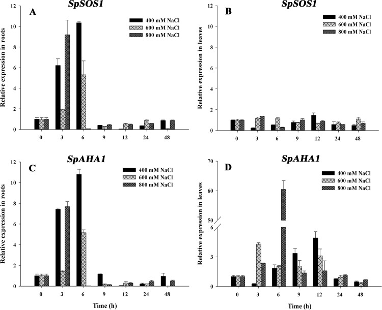 Changes in SpSOS1 and <t>SpAHA1</t> mRNAs in S . portulacastrum exposed to salinity. Seedlings were treated with 400, 600 or 800 mM NaCl. The expression of SpSOS1 (A, B) and SpAHA1 (C, D) was analyzed in roots (A, C) and leaves (B, D) at different time intervals (0, 3, 6, 9, 12, 24 and 48 h) under salt treatment using real-time <t>PCR.</t> The expression value at the initial time (0 h) was set to 1, and the expression levels at the other time points under salinity treatment were calculated as the fold of the value at 0 h. Values are expressed as the means±SE (n = 3).