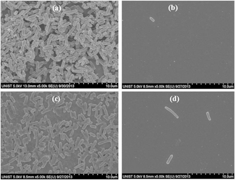 SEM images showing the effects of a treatment with either CO 2 aerosols or hydrolytic enzymes on the E. coli biofilms grown for one day. ( a ) Untreated control chip showing the presence of an extensive E. coli biofilm on the Si surface. ( b ) Biofilm after CO 2 aerosol treatment. ( c ) Image of E. coli biofilm after being soaked in 25 mM HEPES buffer for two hours. ( d ) E. coli biofilm after treatment with HEPES buffer containing both Proteinase K and DNase I.