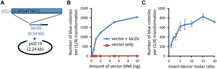 "pUC19- lacZα assembly assay. ( A ) Two fragments were PCR-amplified from the pUC19 vector to create an efficient screen for DNA assembly capability. The smaller ""insert"" fragment contained the coding sequence of the lacZα gene starting at position five and some downstream vector sequence. The larger ""vector"" fragment contained the rest of the plasmid, including the Amp resistance gene ( bla ) and the origin of replication. The fragments shared 50-bp homology at both ends. ( B ) Blue colony formation as a function of DNA concentration. Very few white colonies were observed on any of the plates ( S3 Table ). Small numbers of blue colonies present in the vector-only transformations are indicative of the small amount of contaminating circular template pUC19 used in PCR-mediated linearization of the vector and undigested during DpnI treatment. Insert-to-vector molar ratio was maintained at 5:1, and 25 μl of cells were used, corresponding to ¼ of the recommended volume. ( C ) Effect of insert-to-vector molar ratio on assembly efficiency. The vector DNA quantity was maintained at 0.5 ng. Error bars indicate standard deviation from two independent sets of experiments."