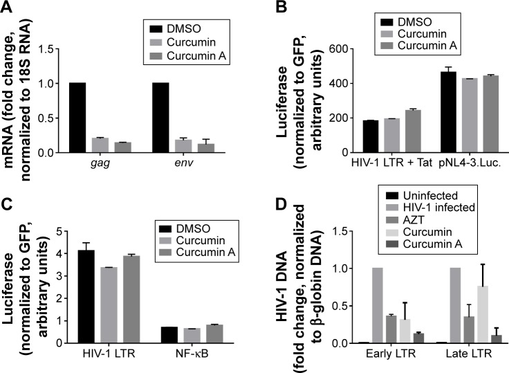 Effect of curcumin and curcumin A on HIV-1 messenger (m)RNA expression, HIV-1 transcription and HIV-1 reverse transcription. Notes: ( A ) Effect of curcumin A on HIV-1 mRNA expr ession. CEM-T cells infected with HIV-1 Luc were treated with DMSO, 1 μM curcumin or 1 μM curcumin A for 48 hours as indicated. RNA was extracted, reverse transcribed, and analyzed with primers for HIV-1 gag and env genes by real-time PCR on Roche 4800 (Hoffman-La Roche Ltd., Basel, Switzerland) using 18S RNA as a reference. ( B , C ). Effect of curcumin and curcumin A on Tat-induced and basal HIV-1 transcription. In panel ( B ) 293T cells were transiently transfected with a vector contacting HIV LTR followed by the luciferase reporter (HIV LTR) and Tat expression vector or pNL4-3.Luc. In panel ( C ) 293T cells were transfected with HIV-1 LTR expression vector or with HIV LTR with the inactivated SP1 sites (NF-κB). For normalization, the cells were also co-transfected with GFP expressing vector. At 24 hours post-transfection the cells were treated with 1 μM curcumin or curcumin A for 24 hours. Then the cells were lyzed and luciferase activity was measured. GFP fluorescence was measured in parallel and used for normalization. ( D ) Effect of curcumin and curcumin A on HIV-1 reverse transcription. CEM-T cells were infected with HIV-1 Luc and then treated with DMSO, AZT, 1 μM curcumin or curcumin A as indicated for 6 hours. DNA was extracted and analyzed by real-time PCR on Roche 4800 using primers for early and late LTR and β-globin gene as a reference. Abbreviations: DMSO, dimethyl sulfoxide; mRNA, messenger RNA; PCR, polymerase chain reaction; AZT, azidothymidine.