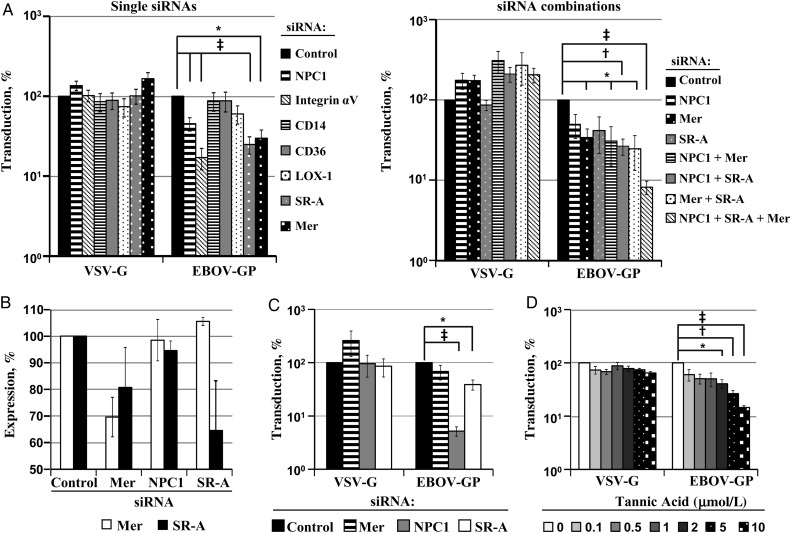 Transfection of macrophages with small interfering RNAs (siRNAs) against Niemann-Pick C1 (NPC1), Mer, and scavenger receptor A (SR-A) reduces Ebola virus (EBOV) glycoprotein (GP)–mediated entry. A , Monocyte-derived macrophages (MDMs) were transfected with the indicated single siRNAs ( left ) or combinations of siRNAs ( right ) and transduced with the indicated pseudotypes. Luciferase activities in cell lysates were determined 72 hours after transduction. Transduction of cells transfected with control siRNA (control) was set at 100%. Results on the left represent the mean of 3 (Mer), 6 (SR-A), and up to 15 experiments (NPC1, CD14, CD36, and integrin αV); results on the right, the mean of 3 independent experiments; error bars indicate standard errors of the mean. B , THP-1 cells induced with phorbol-12-myristate-13-acetate were transfected with the indicated siRNAs, and expression of Mer ( white bars ) was analyzed with flow cytometry. MDMs were transfected with the indicated siRNAs, and SR-A expression ( black bars ) was analyzed by means of Western blotting. The signals measured were quantified with ImageJ software. Expression of Mer and SR-A in cells transfected with control siRNA was set at 100%. Results represent the mean of 4 (Mer expression) to 6 (SR-A expression) independent experiments. C , HeLa cells, which do not express endogenous Mer or SR-A, were transfected with the respective siRNAs and transduced with the indicated pseudotypes. Luciferase activities in cell lysates were analyzed 72 hours after transduction. Results represent the mean of 4 independent experiment performed with triplicate samples. The transduction of cells transfected with control siRNA was set at 100%. D , MDMs were incubated with the indicated concentrations of tannic acid transduced with the indicated pseudotypes, and transduction efficiency was determined as described above. Transduction of cells incubated with solvent (water) was set at 100%. Results represent the mean of 3 separa