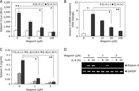 Effects of wogonin on IL-4-induced eotaxin-3 expression in human bronchial epithelial cells. (A) BEAS-2B cells transfected with eotaxin-3 promoter reporter were treated with the indicated concentrations of wogonin for 4 h. Luciferase activity was measured after 24 h of IL-4 stimulation. (B) BEAS-2B cells were pretreated with wogonin for 4 h and then stimulated with IL-4 for another 8 h. Levels of eotaxin-3 mRNA was analyzed by quantitative <t>RT-PCR.</t> (C) BEAS-2B cells were pretreated with wogonin for 4 h and then stimulated with IL-4 for 8 or 24 h. The protein levels of eotaxin-3 in culture supernatants were determined by ELISA. (D) Culture conditions were identical to those in (C). Total <t>RNA</t> was isolated and levels of eotaxin-3 mRNA was analyzed by RT-PCR. Data shown are the mean ± SD of three separate experiments. * p