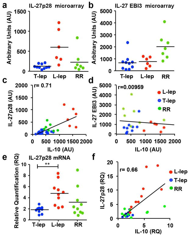 IFN-β induces both IL-27 and IL-10. Total mRNA was isolated from L-lep (n=6), T-lep (n=10) and RR (n=7) skin lesions, and the (a) IL-27p28 and (b) IL-27 EBI3 mRNA levels were analyzed by microarray. (c) Correlation of IL-27p28 and IL-10 detected by microarray (arbitrary units (AU)). (d) No correlation was seen between IL-27 EBI3 and IL-10 by microarray (AU). (e) Total mRNA was isolated from L-lep (n=10), Tlep (n=10) and RR (n=10) skin lesions, IL-27p28 and IL-10 mRNA levels were analyzed by TaqMan qPCR. The levels of IL-27p28 were normalized to GAPDH levels in the same tissue. (f) Correlation between IL- 27p28 and IL-10 measured by qPCR. Statistical significance was calculated by One way ANOVA with Kruskal-Wallis post hoc analysis; **, p ≤ 0.01; *, p ≤ 0.05