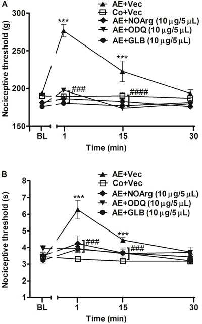 Effect of intracerebroventricular administration of nitric oxide/cGMP/K ATP pathway inhibitors on the antinociception induced by acute aerobic exercise (AE) in the paw-withdrawal ( A ) and tail-flick ( B ) tests. Rats were pretreated with intracerebroventricular injection of N -nitro-L-arginine (L-NOArg, 10 μg/5 µL), H-( 1 , 2 , 4 )oxidiazolo[4,3-a]quinoxalin-1-one (ODQ, 10 μg/5 µL) and glibenclamide (GLB, 10 μg/5 µL) immediately before the onset of exercise, which lasted for a mean of 44.2±1.5 min. Mechanical and thermal nociceptive thresholds were measured before and after 1, 15, 30 min of AE. Data are reported as means±SE of 6 animals per group. ***P