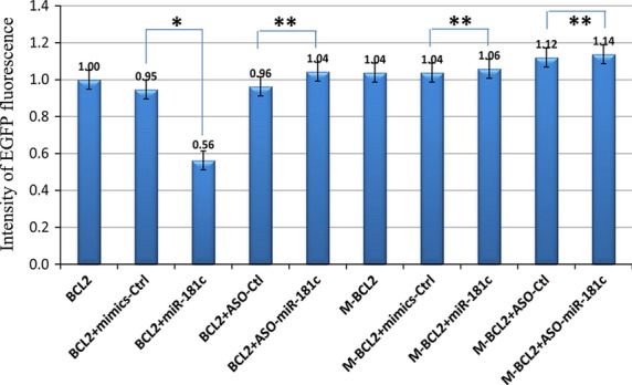 EGFP Reporter Assay. The intensity of EGFP fluorescence in NIH3T3 cells transfected with pcDNA3/EGFP-Bcl2 3′UTR and miR-181c mimic reduce the luciferase activity compared with the control group. Luciferase assays were performed three times in triplicate. (* P