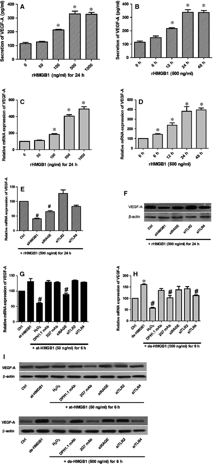 HMGB1, especially its disulfide-bonded form, could regulate the release of VEGF-A. Quantities of VEGF-A expressed after stimulation of HUVECs with increasing concentrations of rHMGB1 (A and C) or duration of stimulation (B and D). (E) At mRNA level, VEGF-A expression was significantly reduced via siRNA inhibition of HMGB1 and RAGE. (F) At protein level, siRNA targeting HMGB1, RAGE and TLR4 had an obvious influence on VEGF-A secretion. (G) at-HMGB1 (50 ng/ml) slightly up-regulated VEGF-A expression ( P > 0.05), which was reversed by effects of H 2 O 2 and si-RAGE. (H) Oxidation and inhibition by 2G7 mAb (1 μg/ml) or si-TLR4 significantly down-regulated the VEGF-A expression induced by ds-HMGB1 (500 ng/ml). For terminally oxidation, at-HMGB1 or ds-HMGB1 was previously exposed to H 2 O 2 (50mM) for 1 hr. (I) The similar VEGF-A reduction by H 2 O 2 , 2G7 mAb or si-TLR4 was determined with Western blot, whereas there displayed no effect of at-HMGB1 or its associated inhibition. *Indicates a P