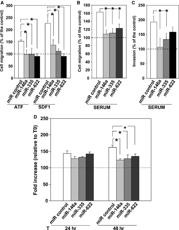 miR-146a, miR-335 and miR-622 regulate THP-1 cell migration, invasion and proliferation. (A–C) THP-1 cells were transiently transfected with the synthetic precursors of miR-146a, miR-335, miR-622 or of a control miR. Then, cells were loaded in Boyden chamber on uncoated filters (A and B) or Matrigel coated filters (C). Then, cells were allowed to migrate towards the uPA aminoterminal fragment (ATF) or the stroma derived factor 1 (SDF1) (A) or towards 10% serum (FBS) (B and C). Migrated cells were fixed, stained with haematoxylin, and counted. Results of migration assays are expressed as percentage of cells migrated towards chemoattractants over the cells migrated without chemoattractants; 100% values represent cell migration in the absence of chemoattractants. The values are the mean ± SEM of three experiments performed in triplicate. (*) P ≤ 0.05, as determined by the Student's t -test. (D) THP-1 cells were transfected with the synthetic precursors of miR-146a, miR-335, miR-622 or of a control miR. Cells, harvested at indicated times, were loaded in 96-well plates and incubated with 20 μl/well of CellTiter 96 AQueous One Solution Reagent for 4 hrs at <t>37°C,</t> 5% CO 2 . Then, the absorbance was determined by an <t>ELISA</t> reader (Bio-Rad) at a wavelength of 490 nm. Fold increase represents the ratio between the OD at indicated time points and OD at time 0. The values are the mean of three experiments performed in triplicate. (*) P ≤ 0.05, as determined by the Student's t -test.