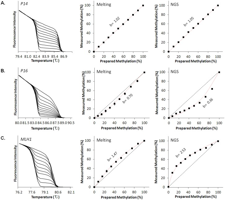 Gene-dependent PCR biases in DNA methylation analyses. Normalized melting profiles (left), standard curves from melting analyses (center) and standard curves from NGS analyses (right) from analysis of working standards of P14 ( A ), P16 ( B ) and MLH1 ( C ) genes. Standard curves for NGS analyses were plotted based on the read counts for unmethylated and methylated DNA from amplicon sequencing as provided in the S5 Table . No PCR bias for P14 , preferential amplification of unmethylated templates for P16 and preferential amplification of methylated templates for MLH1 were consistently observed from both melting- and NGS-based analyses. Bias values (b) were calculated based on a previously described equation [ 19 ].