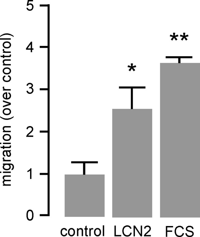 LCN2 induces cell migration of monocytic cells. Migration of murine monocyte/macrophage-like J774A.1 cells in response to LCN2 (0.5 μg/mL) was carried out in transwell cell culture inserts for 24 hours. Medium with 10% FCS was used as positive control. Migration is depicted as induction over unstimulated control. *P