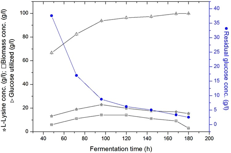 Effect of fermentation time on l -lysine production by immobilized cells of C. glutamicum ATCC 13032