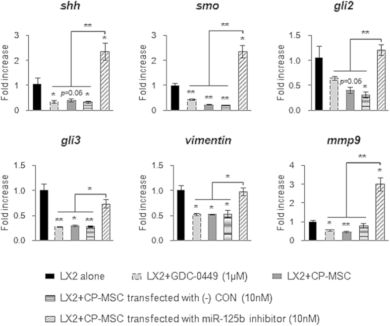 MiRNA-125b-downregulated CP-MSCs fail to downregulate expression of Hh signaling and profibrotic genes in LX2. QRT-PCR analysis of the expression of Hh signals, including shh , smo , gli2 , and gli3 , and profibrotic genes, including vimentin and mmp9 , in LX2 mono-culture (alone), LX2 treated with 1 μM GDC-0449 (Smo antagonist), and co-cultured LX2 with CP-MSCs (CP-MSC), CP-MSC having miRNA-125b inhibitor (CP-MSC miRNA-125b inhibitor), or CP-MSC having scrambled-miRNA inhibitor (CP-MSC (-) CON) for 12 hours. The mean ± SEM results obtained from three repetitive experiments are graphed (* p