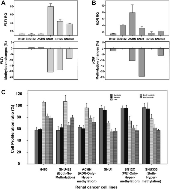FLT1 and KDR expression and the proliferation-inhibitory effects of sunitinib or axitinib after demethylation treatment. Promoter methylation and gene expression were evaluated after demethylation treatment in RCC lines. Changes in expression (RQ) and methylation (%) in FLT1 ( a ) and KDR ( b ) after demethylation using DAC, a demethylating agent. Proliferation of RCC lines following treatment with sunitinib or axitinib and/or DAC( c ). The error bars show standard errors
