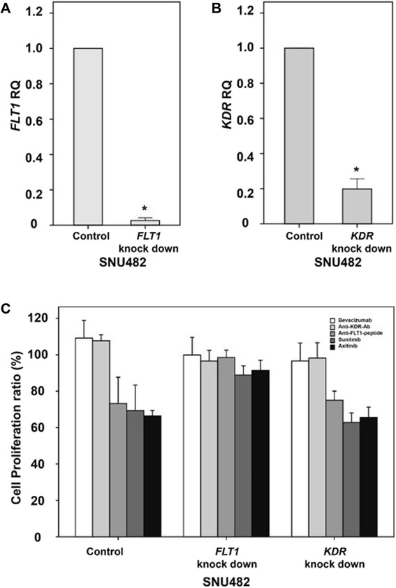 Expression changes and anti-VEGF/VEGFR drug efficacies following knockdown of FLT1 or KDR in vitro. Expression of FLT1 ( a ) and KDR ( b ) in SNU482 renal cancer cells after transduction with an shRNA targeting FLT1 or KDR . The effects of bevacizumab, an anti-FLT1 peptide, an anti-KDR antibody, sunitinib, and axitinib on proliferation were evaluated in SNU482 cells transduced with lentiviral vectors expressing FLT1 or KDR or an empty lentiviral vector ( c ). The error bars show the standard errors