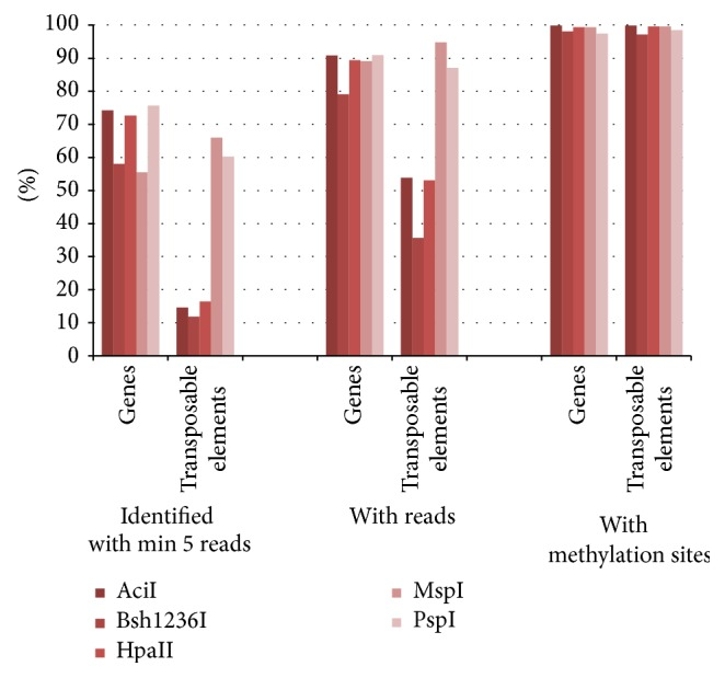 Genes and transposable elements identified in the rice genome with the methyl filtration technique. The regions comprised of at least five reads (left), and all regions (middle) show a clear depletion of transposable elements for AciI, Bsh1236I, and HpaII. On the right a representation of genes and transposable elements is given showing potential methylation sites within their gene space. All values are shown in percent based on the annotated 39.954 genes and 15.847 transposable elements.