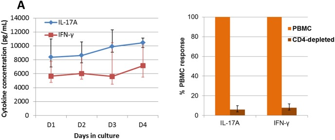 Antigen-specific whole blood assay. ( A) Time-course of IL-17A and <t>IFN-γ</t> production by whole blood cultured with OVA. The blood of the 10 responder cows (taken 45 days after the first immunization) was cultured in the presence of OVA (10 μg/mL) for 1 to 4 days in 96-well microplates. For each cow triplicate wells were used for each incubation time. Results are median values and quartiles (Q1; Q3). (B) The effect of magnetic depletion of CD4+ cells on the production of IL-17A and IFN-γ in the antigen-specific whole blood assay. Results obtained by stimulating blood samples from responder cows 15 days after the booster immunization are expressed as the percentage of the production by CD4+-depleted PBMC relative to cytokine production by un processed PBMC (100%). The viability of cells was not altered by the magnetic cell separation.