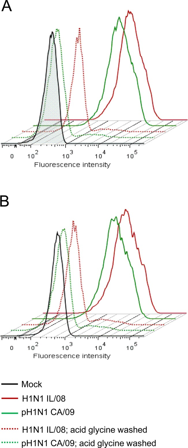 Binding of IAV to pAEC and ipAEC. Primary pAECs (A) or immortalized pAECs (B) were incubated with H1N1 IL/08 (red), pH1N1 CA/09 (green) or mock virus preparation (black) at an MOI of 50 for 90 min on ice. Cells were washed either with cold DMEM (solid lines) or acid glycine buffer (dotted lines). Surface bound virus was analyzed by flowcytometry using anti-NP monoclonal antibody followed by <t>Alexa</t> <t>Fluor</t> 647 conjugated goat anti-mouse <t>IgG2a.</t> Data are representative of three independent experiments.