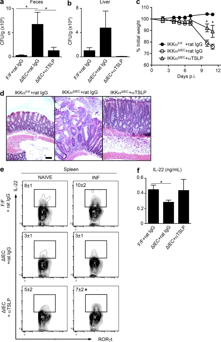 Neutralization of TSLP partially restores immunity to C. rodentium infection in IKKα ΔIEC mice. IKKα ΔIEC mice were infected with C. rodentium and injected i.p. with either 0.5 mg rat IgG control or anti-TSLP mAb every 3 d (littermate control IKKα F/F mice received rat IgG only). (a and c) C. rodentium CFU in the feces on day 6 p.i. (a) and liver on day 11 p.i. (b). (c) Percentage of initial body weight. (d) H E staining of colon tissue sections of day 11 C. rodentium –infected mice. Bar, 50 µm. (e) IL-22 expression by splenic ILCs at day 4 p.i., after ex vivo PMA and ionomycin stimulation. (f) IL-22 protein expression within colon homogenate tissue from day 4 infected mice. Data for a–d are representative of three experiments (IKKα F/F + rat IgG, n = 13; IKKα ΔIEC + rat IgG, n = 10; IKKα ΔIEC + anti-TSLP, n = 9), and data for e and f are representative of two experiments (IKKα F/F + rat IgG, n = 8; IKKα ΔIEC + rat IgG, n = 6; IKKα ΔIEC + anti-TSLP, n = 6). Data are expressed as mean ± SEM. *, P