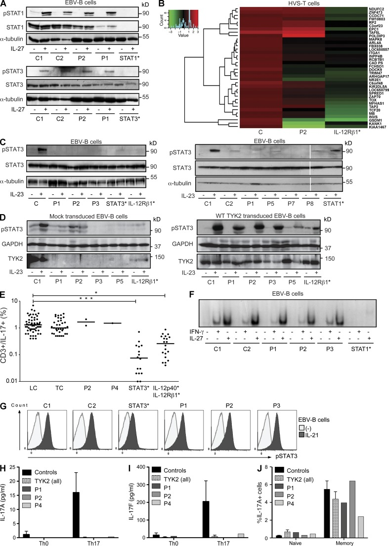 TYK2 deficiency impairs the response to IL-23 but not to IL-27 nor IFN-γ. (A) Western blot analysis of STAT1 (pSTAT1, top) and STAT3 (pSTAT3, bottom) phosphorylation in EBV–B cells from healthy controls (C1 and C2), TYK2-deficient patients (P1 and P2), a patient with complete STAT1 deficiency (STAT1*), and an AD-HIES patient with a heterozygous STAT3 mutation (WT/T708N; STAT3*), after stimulation with 100 ng/ml IL-27 for 20 min. STAT1, STAT3, and α-tubulin levels were also assessed. The results shown are representative of at least two independent experiments. (B) Microarray analysis of HVS–T cell lines from three healthy controls, P2, and an IL-12Rβ1–deficient patient. Cells were stimulated for 12 h with 100 ng/ml IL-23. The difference between nonstimulated and stimulated cultures is shown as a fold change. (C) Western blot depicting phospho-STAT3 (pSTAT3) in EBV–B cells from a healthy control (C, C1, and C2), TYK2-deficient patients (P1, P2, P3, P5, P7, and P8), an AD-HIES patient carrying a heterozygous STAT3 mutation (WT/T708N; STAT3*), an IL-12Rβ1–deficient patient (IL-12Rβ1*), and a STAT1-deficient patient (STAT1*), without (−) and with (+) stimulation for 30 min with 100 ng/ml IL-23. α-Tubulin was used as a protein loading control. The results shown are representative of at least three independent experiments. After analysis by densitometry, a p-value