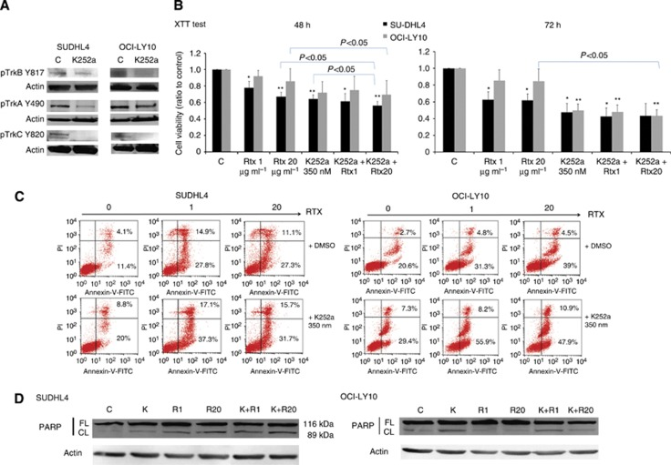 Pharmacological inhibition of Trk receptors sensitises the effect of rituximab in ABC and GCB cell lines. GCB- (SUDHL4) and ABC (OCI-LY10)-like DLBCL cells were exposed to rituximab (RTX, 1 and 20 μ g ml −1 ) with or without (C, controls) pharmacological inhibitor of Trk receptors, K252a (350 n M ). ( A ) Inhibition of Trk signalling by K252a was confirmed in both cell lines by western blot analysis of TrkA, TrkB and TrkC receptor phosphorylation. ( B ) Viability of cells was evaluated during 48 h and 72 h using the XTT test and data are expressed as means±s.d. of relative cell viability (ratio) related to control obtained from four independent experiments. ** P