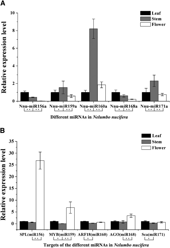 The relative expression levels of five miRNAs and target genes in young leaves, stems, and flowers of Nelumbo nucifera . (A) The relative expression levels of five miRNAs in N. nucifera . (B) The relative expression levels of five corresponding target genes in N. nucifera . Significant differences of the differential expression among different tissues in N. nucifera were evaluated by Student's t test (* P