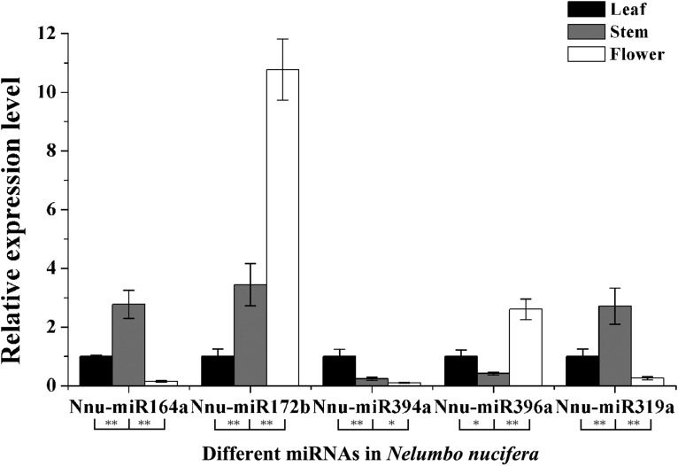 The relative expression levels of five miRNAs in young leaves, stems, and flowers of Nelumbo nucifera . Significant differences of the differential expression among different tissues in N. nucifera were evaluated by Student's t test (* P