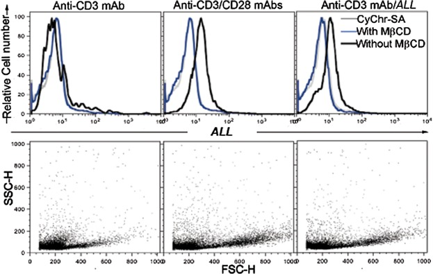 Glycoprotein recognized by A. leucocarpus lectin is associated to lipid rafts. Murine lymph node CD4 + T cells were cultured during 48 h. Representative histograms of fluorescent cells and dot plots of proliferating cells analyzed by flow cytometry. Cells were activated via anti-CD3 mAb alone (left panels) or in the presence of anti-CD28 mAb or ALL (middle and right panels). After culture, cells were treated (blue line in histograms) or not (black line in histograms) with <t>methyl-β-cyclodextrin</t> <t>(MβCD).</t> Next, cells were incubated with biotin- ALL followed by the CyChr-streptavidin (CyChr-SA) fluorescent staining. CyChr-SA as staining control (gray line in histograms) was used. Results are representative of three independent experiments.