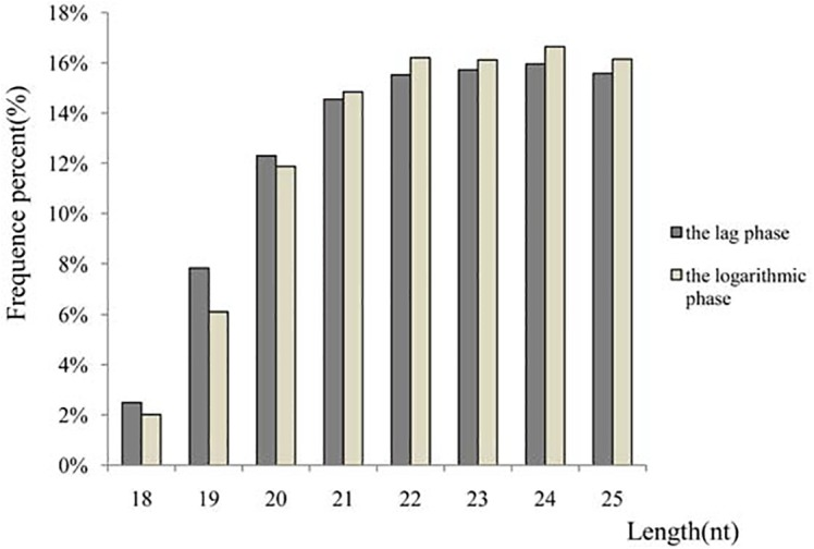 Length distribution and abundance of sequenced small RNA sequences in A . catenella libraries. Among the small RNAs in the range of 18–25 nt, the most abundant size was 24 nt, followed by 22 nt and 25 nt.