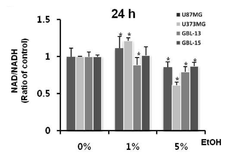 Ethanol increases the intracellular NADH concentration. The ratio of NAD/NADH was determined by the NADP+/NADPH Quantification Kit (BioVision, Inc. K347-100, SF, USA) in GBL-13, GBL-15, U87MG and U373MG. This experiment was conducted in four types of cells that were treated with ethanol for 24 h. Values are expressed as mean and SD. * p