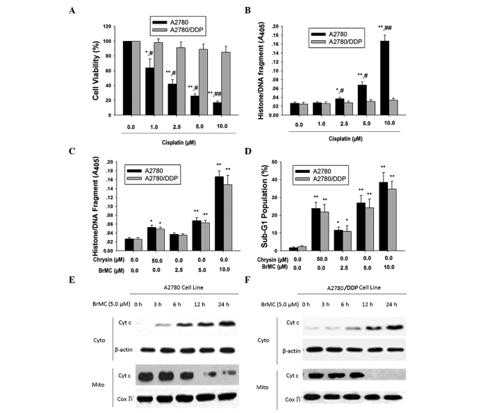 BrMC induces apoptosis in cisplatin-sensitive and -resistant human ovarian cells. (A and B) Effect of cisplatin on apoptosis in ovarian cancer cell lines in a dose-dependent manner. Cells were treated with the indicated concentrations of cisplatin for 48 h. ELISA was used to determine histone/DNA fragmentation. Data are presented as the mean ± SD (n=4). * P