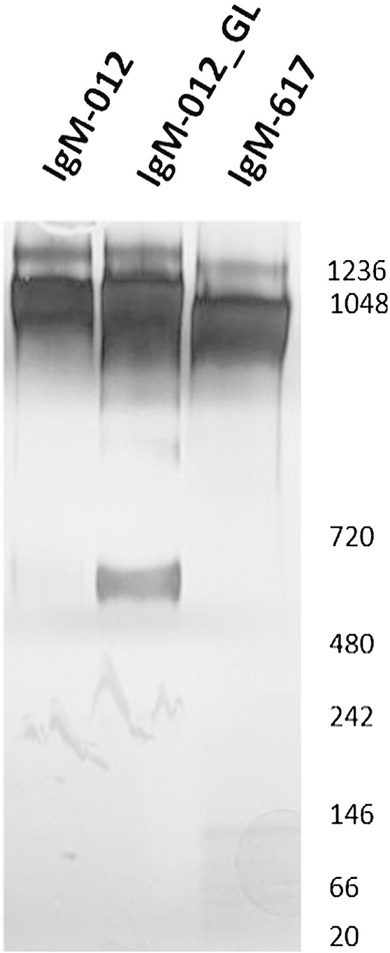 <t>SDS-PAGE</t> of 2G12-IgM. Purified IgM-012, IgM-012_GL and IgM-617 (control) were separated on 3–12% gradient <t>NuPage®</t> <t>Bis-Tris</t> gels and detected by silver staining.