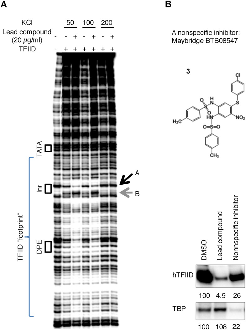 ( A ) DNase I footprinting assay of TFIID-promoter binding and its enhancement by the specific inhibitor at different salt concentrations. ( B ) A non-specific inhibitor (Maybridge BTB08574): its structure (top) and inhibition of both TFIID- and TBP-directed transcription (bottom). The lead compound used here was ChemDiv 7241-4207. DOI: http://dx.doi.org/10.7554/eLife.07777.013