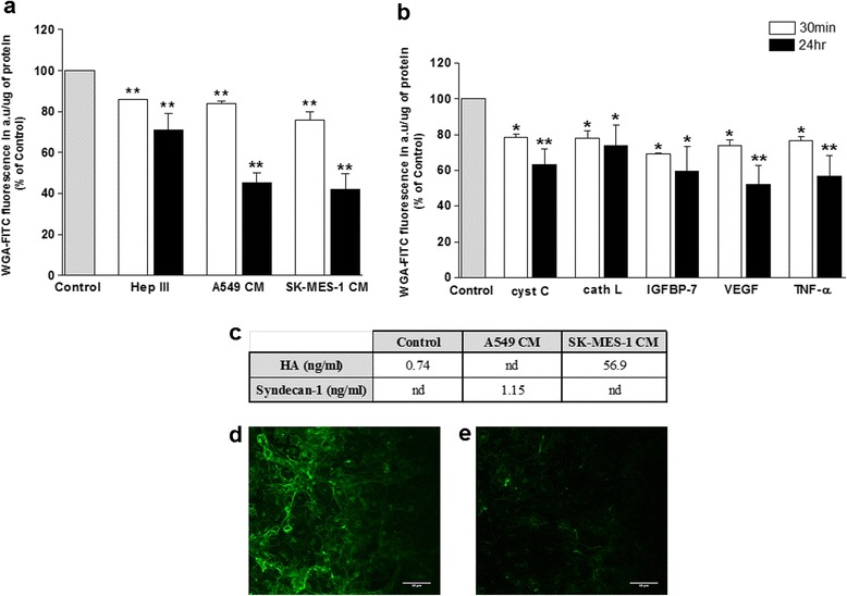 Exposure of lung tumour CM and secreted-proteins significantly altered the brain endothelial glycocalyx. a and b Integrity of the hCMEC/D3 glycocalyx was assessed by a CBF assay following exposure of ECs for 30 min or 24 h to A549 and SKMES-1 CM ( a ), or 80 ng/ml CC, 10 ng/ml CL, 200 ng/ml IGFBP-7, 0.2 ng/ml VEGF and 160 pg/ml TNF-α ( b ). Data from 6 independent experiments, carried out in sextuplicate, is presented as WGA-FITC fluorescence/μg protein and these values were calculated as a percentage of control. * p ≤ 0.05, ** p ≤ 0.01 vs control level. c Hyaluronan (HA) and syndecan-1 levels were measured by ELISA in hCMEC/D3 growth medium following 30 min treatment with fresh DMEM-BS (control), A549 or SK-MES-1 CM. SK-MES-1 CM vs control = p = 0.007, n = 6. nd = not detected. d and c Representative confocal images of FITC-WGA stained hCMEC/D3 cells before ( d ) and ( e ) after 30 min exposure to SKMES-1 CM. Scale bar = 40 μM