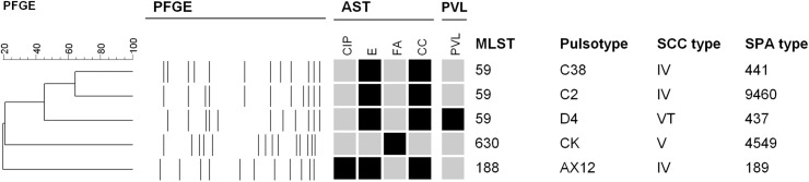 Molecular characteristics of methicillin-resistant Staphylococcus aureus isolates from five janitors. All five isolates were resistant to penicillin, and susceptible to vancomycin, teicoplanin, linezolid, doxycycline and trimethoprim-sulfamethoxazole. Antimicrobial susceptibility tests (AST): black indicates resistance, and grey indicates susceptibility. CIP: ciprofloxacin; E: erythromycin; FA: fusidic acid; CC: clindamycin; PFGE: pulsed-field gel electrophoresis; PVL: black indicates that Pantone-Valentine leucocidin genes were detected; SCC: staphylococcal chromosome cassette; MLST: multilocus sequence typing.