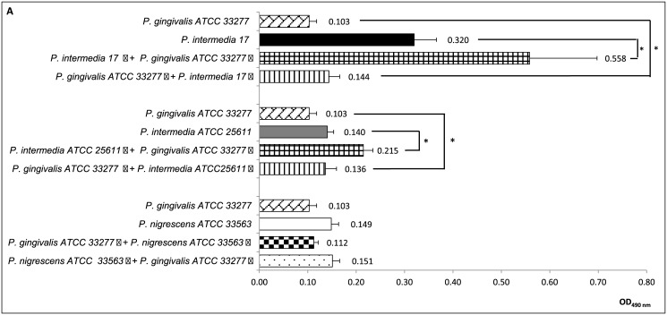 Effect of co-culture of Porphyromonas gingivalis , Prevotella intermedia and Prevotella nigrescens on biofilm formation in a two-compartment co-culture system. Panel A : P . gingivalis ATCC33277 and co-culture partners P . intermedia strains 17 and ATCC25611, and P . nigrescens ATCC33563. Panel B : P . gingivalis W83 and co-culture partners P . intermedia strains 17 and ATCC25611, and P . nigrescens ATCC33563. Panel C : P . intermedia strains 17 and ATCC25611 and co-culture partner P . nigrescens ATCC33563 Values represent average of 3 experiments (Kruskal-Wallis test followed by nonparametric post-tests, * p