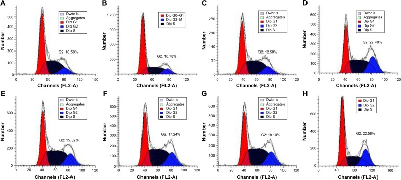 Induction of cell cycle arrest in PC-3 cells treated with DNAzyme transfection determined by flow cytometry. Notes: ( A ) No treatment; ( B ) treatment with N -Ac- l -Leu-PEI for 24 hours; ( C ) treatment with N -Ac- l -Leu-PEI/iDz for 24 hours; ( D ) treatment with Lipofectamine™2000/Dz (6 μg DNAzyme) for 48 hours; ( E – G ) treatment with N -Ac- l -Leu-PEI/Dz for 24 hours with a DNAzyme amount of 2 μg, 4 μg, and 6 μg, respectively; and ( H ) treatment with N -Ac- l -Leu-PEI/Dz with a DNAzyme amount of 6 μg for 48 hours. Abbreviations: N -Ac- l -Leu-PEI, N -acetyl- l -leucine-polyethylenimine; iDz, inactive DNAzyme.