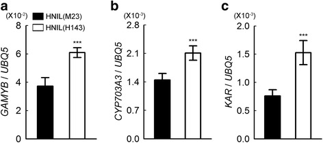 Up-regulation of GAMYB and pollen formation-related genes in the spikelets of HNIL(H143). Relative transcript levels of GAMYB ( a ), CYP703A3 ( Cytochrome P450 hydroxylase ) ( b ), KAR (β -ketoacyl reductase ) ( c ) in HNIL(M23) and HNIL(H143) spikelets were normalized to the transcript levels of UBQ5 . The RT-qPCR was performed with total RNA from spikelets at heading stage. The data were obtained from three independent biological replicates. Reactions were repeated at least twice. Student's t -test was used for statistical analysis (*** P