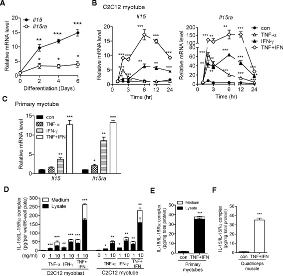 Skeletal muscle cells express IL-15/IL-15Rα protein complex in response to TNF-α and IFN-γ stimulation. a Expression of Il15 and Il15ra mRNA during C2C12 myoblast differentiation. Samples were collected before (0) and 2, 4, and 6 days after differentiation induction. b Expression of Il15 and Il15ra mRNA in C2C12 myotubes treated with TNF-α (10 ng/ml), IFN-γ (10 ng/ml), TNF-α + IFN-γ (TNF + IFN, 10 ng/ml each), or without cytokine ( con ) for 1, 2, 3, 6, 12, and 24 h. c Expression of Il15 and Il15ra mRNA in primary myotubes treated with TNF-α (5 ng/ml), IFN-γ (5 ng/ml), TNF + IFN (5 ng/ml each), or without cytokine ( con ) for 24 h. d Expression of IL-15/IL-15Rα complex protein in C2C12 myoblasts and myotubes treated with TNF-α (1 or 10 ng/ml), IFN-γ (1 or 10 ng/ml), TNF + IFN (1 or 10 ng/ml each), or without cytokine ( con ) for 24 h. e Expression of IL-15/IL-15Rα complex protein in primary myotubes treated with TNF + IFN (5 ng/ml each) or vehicle ( con ) for 24 h. f Expression of IL-15/IL-15Rα complex protein in skeletal muscle in vivo. TNF-α plus IFN-γ (1 mg each/injection) or PBS ( con ) was injected into the quadriceps muscles of mice three times at 4-h intervals. The injected muscles were collected 16 h after the last injection. Total RNA was isolated and analyzed by qPCR ( a–c ). Protein lysate and cell culture medium were collected and measured by ELISA ( d–f ). Data in ( a–c ) were triplicates and representative of two independent experiments with similar result. Data in ( d, e ) were pooled from three independent experiments. Data in ( f ) was pooled from three mice in each group. Data are mean ± SEM. * p