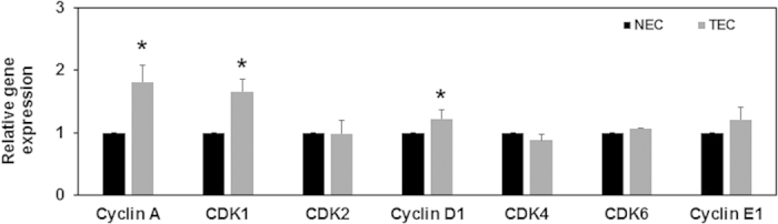 TEC express increased levels of proliferation-associated genes. Relative gene expression of cell-cycle associated genes in NEC and TEC. EC were treated with GSK (100 nM) for 24 h and subsequently lysed for RNA isolation. cDNA was prepared and qPCR analysis was performed using Fast SYBR green master mix (Applied Biosystems). Gene expression was first normalized to GAPDH and presented as relative expression to NEC. All the data shown is mean ± SEM from at least three independent experiments.