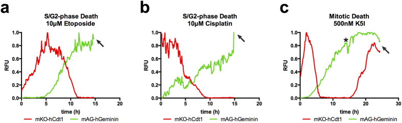 HT1080 FUCCI show strong cell cycle-associated cell death. Cell cycle-associated death standards are used. ( a ) A representative FUCCI trace of cells treated with the topoisomerase-α poison, <t>etoposide.</t> Cells progress from G1-phase (red), with normal kinetics, progress to a green state and die, consistent with S/G2-phase associated death. ( b ) A representative FUCCI trace of cells treated with the DNA modifier, cisplatin. Cells most often progress normally from G1-phase (red) to an all green state and die, consistent with S-phase associated death. ( c ) A representative FUCCI trace of cells treated with a Kinesin-5 inhibitor, K5I. This cell progresses through the cell cycle with normal kinetics and enters mitotic arrest at 14 h post-treatment (*). While arrested, red signal is reacquired after 3–4 h, beginning at 17 h. This cell dies at 23 h and nearly all other cells also die while arrested in mitosis. Arrows indicate time of death. See Supplementary Fig. 1e–g online for FUCCI distributions over time. Supplementary video S6-8 online. Cell number tracked: etoposide, 33, cisplatin, 21, K5I, 30.