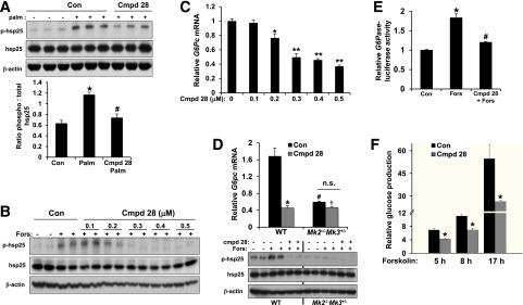 Cmpd 28 is an effective inhibitor of MK2/3 activity in liver cells and inhibits forskolin-induced hsp25 phosphorylation and G6pc expression. A : Primary HCs from WT mice were pretreated with either vehicle (Control [Con]) or 500 nm cmpd 28 for 1 h followed by incubation with either BSA control or 0.3 mmol/L palmitate (palm) for 6 h. Lysates were probed for p-hsp25, hsp25, and β-actin by immunoblot. Densitometric quantification of the immunoblot data are shown in the graph (differing symbols indicate P