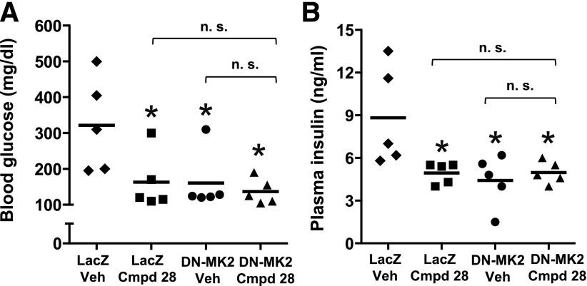 The metabolic improvement by cmpd 28 and dominant-negative MK2 in obese mice is not additive. Ten-week-old ob/ob mice were transduced with adeno-LacZ or adeno–T222A-MK2 (dominant negative), which inhibits hepatic MK2. Mice were then treated with 0.2 mg/kg body wt i.p. cmpd 28 or vehicle (Veh) for 7 days ( n = 5 mice per group). After a 6-h fast, the mice were assayed for fasting blood glucose ( A ) and plasma insulin ( B ) (* P
