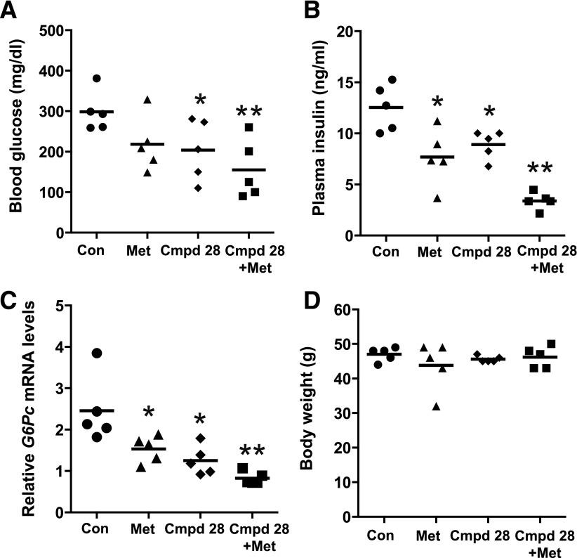 The metabolic improvement by cmpd 28 and metformin in obese mice is additive. Ten-week-old ob/ob mice were treated intraperitoneally with vehicle (control [Con]), 200 mg/kg body wt metformin (Met), 0.2 mg/kg body wt cmpd 28, or both compounds for 14 days ( n = 5 mice per group). The mice were assayed for fasting blood glucose ( A ), plasma insulin ( B ), hepatic G6pc mRNA expression levels ( C ), and body weight ( D ) (* P