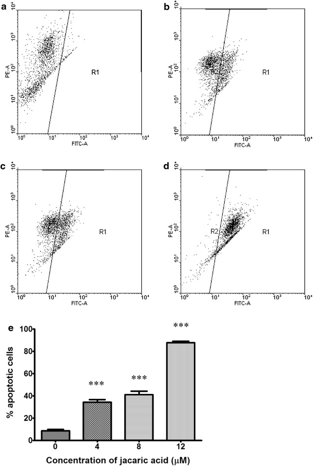 Jacaric acid induces mitochondrial membrane depolarization in PU5-1.8 cells. PU5-1.8 cells were incubated with either ethanol control ( a ), or 4 μM jacaric acid ( b ), 8 μM jacaric acid ( c ) and 12 μM jacaric acid ( d ) at 37 °C for 24 h. After incubation, the cells were stained with JC-1 dye. The fluorescence intensity was measured by the FACSCanto™ flow cytometer. e The results were quantified and expressed as mean ± SE. *** p