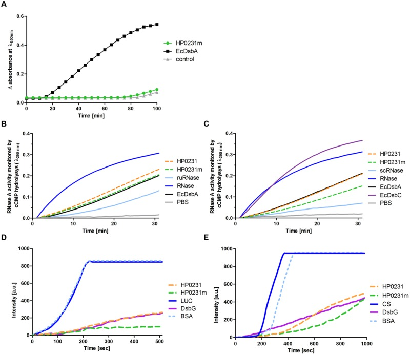 Biochemical assays performed on purified HP0231 and HP0231m. Purified EcDsbA, EcDsbC, or EcDsbG were used as controls. (A) HP0231m is not active in the insulin reduction assay. The reaction contained 131 μM insulin in potassium phosphate buffer, pH 7.0 and 2 mM EDTA. The reaction was performed in the absence or presence of 10 μM EcDsbA and 10 μM HP0231m. Reactions were started by adding DTT to the final concentration of 1 mM. Changes in the absorbance at 650 nm as a function of time were measured. The figure presents the average of three independent experiments ( n = 3). (B) HP0231 and HP0231m are active in an oxidase activity assay (reduced unfolded – ruRNase activity assay). Reactions were carried out in 200 μl of PBS buffer containing 100 mM Tris acetate pH 8.0, 2 mM EDTA, 0.2 mM GSSG, 1 mM GSH, 4,5 mM cCMP, ruRNaseA (10 μM) and the analyzed enzyme (20 μM). The reaction was performed in the absence or presence of 20 μM EcDsbA, 20 μM HP0231, or 20 μM HP0231m. Changes in absorbance at 296 nm as a function of time were measured. Three independent experiments were performed. The figure presents a representative result. (C) HP0231 and HP0231m cannot work as isomerases in the scrambled RNase (scRNase) activity assay. Reactions were carried out in 200 μl of PBS buffer containing 100 mM Tris acetate pH 8.0, 2 mM EDTA, 10 μM DTT, 4.5 mM cCMP, scRNaseA (40 μM) and the analyzed enzyme (20 μM). Reactions were performed in the absence or presence of 20 μM EcDsbC, 20 μM HP0231, or 20 μM HP0231m. Changes in absorbance at 296 nm as a function of time were measured. Three independent experiments were performed. The figure presents a representative result. (D) HP0231 and HP0231m suppress the thermal aggregation of luciferase (LUC) in the chaperone activity assay. LUC was diluted to a final concentration of 0.10 μM into 40 mM HEPES-KOH buffer, pH 7.5, equilibrated at 43°C in the absence or in the presence of 0.15 μM HP0231 or 0.15 μM HP0231m, respectively. Protein aggregation was m