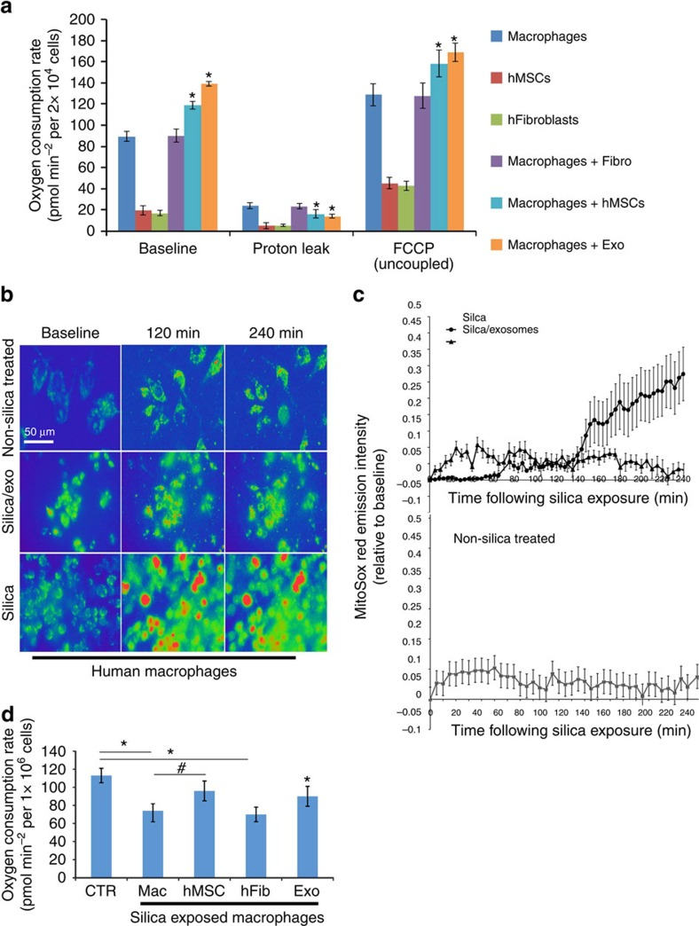 MSCs enhance macrophage bioenergetics. ( a ) Mitochondrial respiration of human macrophages, human MSCs or human fibroblasts was measured as OCR using the XF technology. Macrophages were co-cultured with or without human MSCs or fibroblasts (1:10 ratio) or treated with human MSC-derived exosomes (40 μg per protein) in the presence or absence of Oligomycin A and FCCP to differentiate ATP-linked respiration from the proton leak. Plotted data (mean±s.e.m.) were performed using six replicates per sample and repeated three times. ( b ) Pseudocoloured photomicrographs (0–240 min) of MitoSOX Red-stained macrophages that were non-stimulated (upper panel), or treated with silica (20 μg cm −2 , lower panel) or silica plus human MSC-derived exosomes (added 10 min after silica, middle panel). Scale bars, 50 μ. ( c ) Time course of MitoSOX Red emission by human macrophages treated as in b . Figure is representative of five exposures (nine stages positions per test and 6 cells per stage). ( d ) OCR as in a of silica-exposed macrophages treated with or without human MSCs, human MSC-derived exosomes or human fibroblasts. Plotted values (mean±s.e.m.) are from experiments repeated three times, * P
