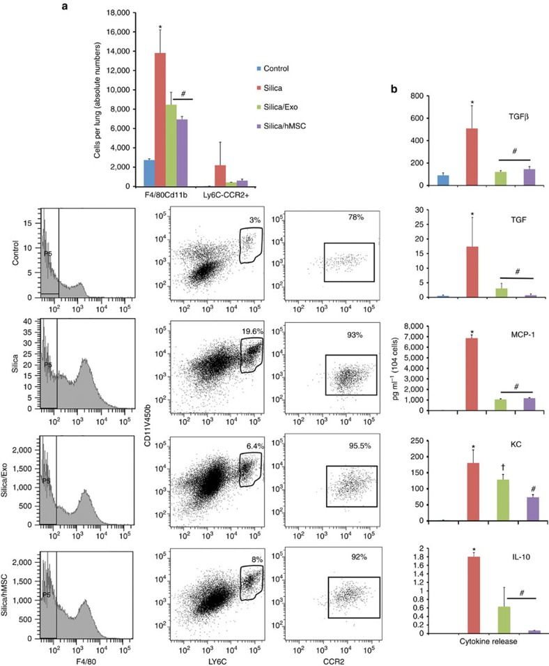 Human MSCs and their exosomes prevent the accumulation of Ly6C hi monocytes in the lungs of silica-exposed mice. ( a ) Upper panel, absolute number of F4/80/CD11b- and Ly6C/CCR2-expressing cells in lung tissue of mice 72 h post administration of saline (50 μl), silica (0.2 g kg −1 ) or silica plus human MSC-derived exosomes (∼3 × 10 11 exosomes containing 40 μg protein). * P