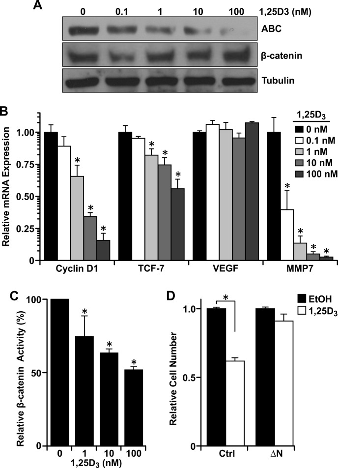 Vitamin D 3 -dependent VDR signaling reduces β-catenin transcriptional activity A. Western analysis demonstrating a dose-dependent reduction in active β-catenin (ABC) levels in R7 cells treated with the designated concentrations of 1,25D 3 for 48 hours, but no change in total β-catenin. B. qRT-PCR analysis of β-catenin target genes <t>cyclin</t> D1, TCF-7, VEGF, and MMP7 in R7 cells treated with the designated concentrations of 1,25D 3 for 72 hours. Data represent mean values from three independent experiments ± SE. C. Dual luciferase assays in R7 cells co-transfected with Topflash and pRLTX (expressing Renilla ) plasmids for 48 hours, then treated with the designated concentrations of 1,25D 3 for 24 hours. Luciferase activities were normalized for transfection efficiency to Renilla activity. Data represent mean values from three independent experiments ± SE. D. Crystal violet staining of R7 cells transfected with a stabilized form of β-catenin (ΔN) or empty vector and treated with 100 nM 1,25D 3 or vehicle control (EtOH). Data represent mean values from four independent experiments ± SE. * P