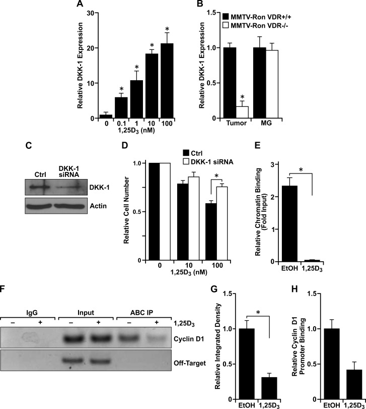 Vitamin D 3 -dependent VDR signaling induces DKK-1 expression and binds to β-catenin to disrupt interaction at consensus sequences within promoters of TCF/LEF target genes A. qRT-PCR mRNA expression of DKK-1 in R7 cells treated with the designated concentrations of 1,25D 3 for 72 hours. Data represent mean values from three independent experiments ± SE. B. qRT-PCR mRNA expression of DKK-1 in tumors and mammary glands (MG) from 8 month-old MMTV-Ron VDR+/+ and VDR−/− mice demonstrating a reduction in DKK-1 levels in tumors with loss of VDR. Data represent mean values from three independent experiments ± SE. C. Western blot demonstrating loss of DKK-1 protein expression with siRNA-mediated silencing in R7 cells. D. R7 cells transfected with siRNA against DKK-1 were treated with the designated concentrations of 1,25D 3 for 72 hours and cell viability/number was determined by crystal violet assays. Data are normalized to the respective vehicle treated cells set at 1 and represent mean values from two independent experiments performed in quadruplicate ± SE. E. Chromatin immunoprecipitation (ChIP) assays with a mouse IgG isotype control and an anti-active β-catenin (ABC) antibody. ChIP-ABC quantitative real time PCR (qRT-PCR) analysis of R7 cells treated with 100 nM 1,25D 3 for 72 hours. The graph shows qRT-PCR on DNA purified from ChIP-ABC, using primers designed to the LEF-1 binding sequence within the mouse cyclin D1 promoter and relative to the respective input controls. Vitamin D 3 treatment significantly reduces enrichment compared to the vehicle control (EtOH). Data represent mean values from three independent experiments ± SE. F. Representative agarose gel from ChIP-ABC PCR showing reduced cyclin D1 promoter enrichment with vitamin D 3 treatment in R7 cells. Negative control primers designed to a site 4000 bp upstream of the LEF-1 binding sequence within the cyclin D1 promoter (Off-Target) verify specificity of cyclin D1 primers to the sheared DNA product. G. Densitometry analysis of PCR products from three separate ChIP-ABC experiments supporting loss of ABC interaction with the cyclin D1 promoter. Error bars represent SE. H. Re-ChIP qRT-PCR analysis of R7 cells treated with 100 nM 1,25D 3 for 72 hours and sequentially immunoprecipitated with anti-ABC then anti-VDR antibodies. The graph shows qRT-PCR of DNA purified from ChIP-ABC-VDR, using primers designed to the LEF-1 binding sequence within the mouse cyclin D1 promoter, and showing less interaction of the ABC-VDR complex at the cyclin D1 promoter. Data represent the relative mean CT values from two experiments ± standard deviation. * P